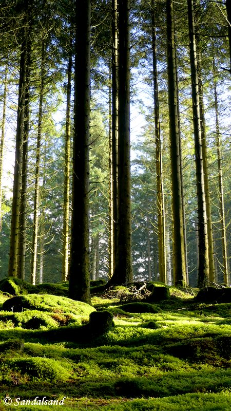 Rogaland - Sandnes - Vagleskogen